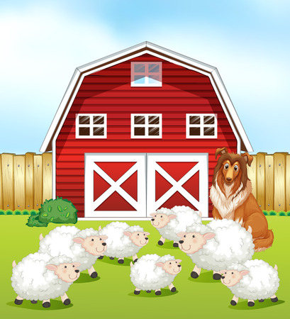 sheep barn: Sheep standing on the field in front of a barn Illustration