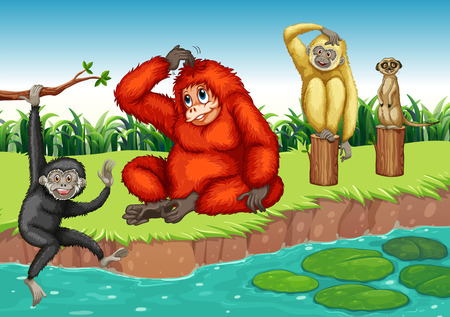 river bank: Monkeys sitting on the river bank Illustration