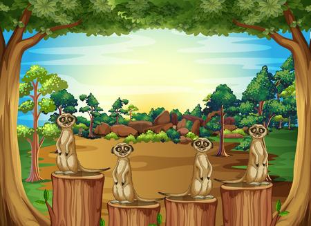 Stokstaartjes staan op log in de jungle