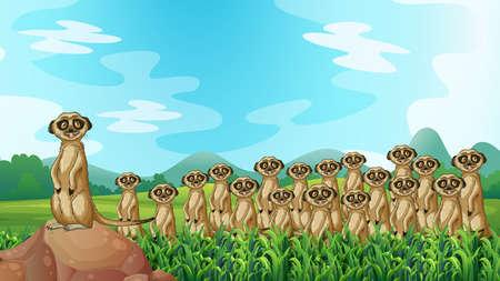 Group of meerkats standing in the field Illustration