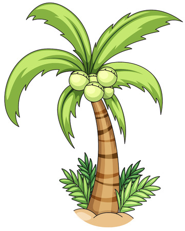 Closeup single coconut tree with coconuts Illustration