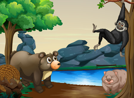 river bank: Different kind of animals by the river bank Illustration