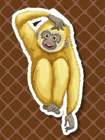 closeup: Closeup wei�en Gibbon sitzt allein