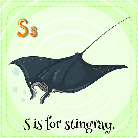 Flashcard letter S is for stingray Vector
