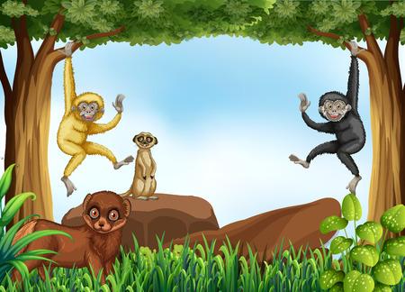animales de la selva: Muchos animales que viven en la selva Vectores