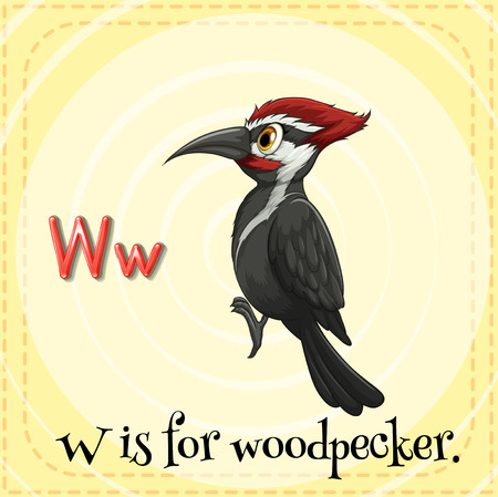 phonetic: Flashcard letter W is for woodpecker Illustration