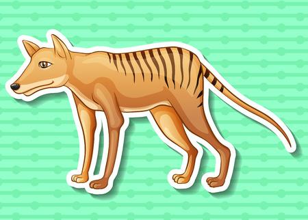 closeup: Closeup cute tasmanian tiger on green background Illustration