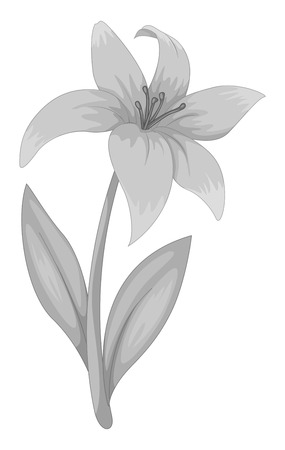 Lily flower in black and white Illustration