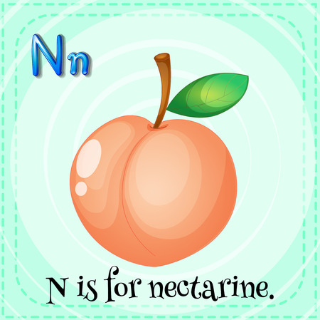 nectarine: Flashcard letter N is for nectarine