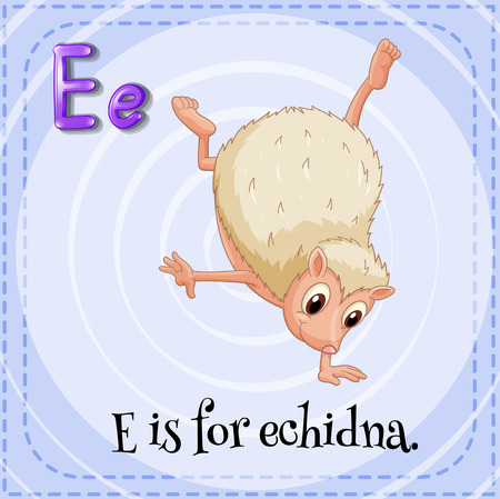 echidna: Flashcard letter E is for echidna