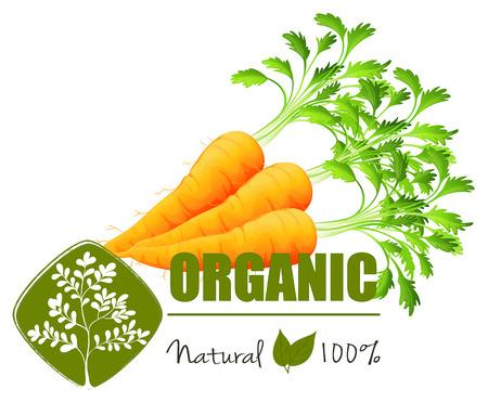 farm fresh: Farm fresh organic carrots with leaves Illustration