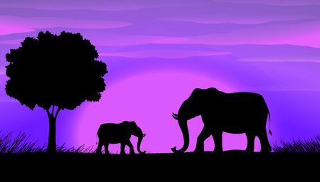 sihouette: Sihouette elephants in the field
