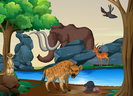 river bank: Poster of wild animals at the river bank