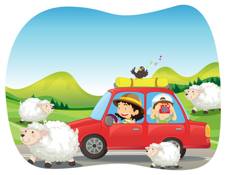 roadtrip: Roadtrip to the countryside with sheeps and field background