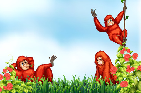chimpanzee: Three red chimpanzee are relaxing  Illustration