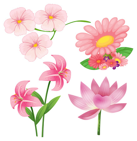 nectars: Set of different kind of pink flowers on white background