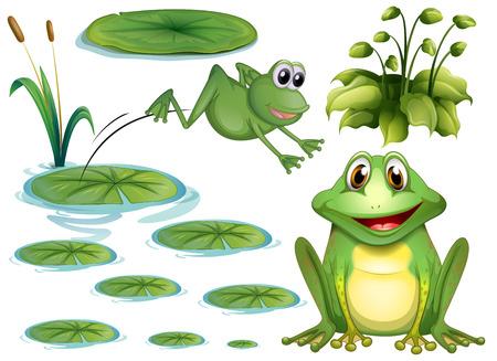 rana caricatura: Conjunto de la rana verde y lirio de agua