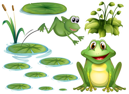 Set of green frog and water lily Illustration