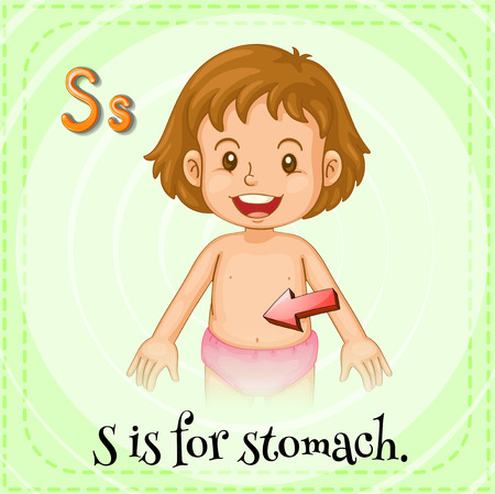 s stomach: Flashcard letter S is for stomach Illustration