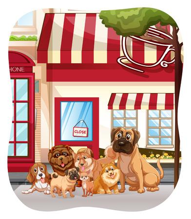 perro boxer: Los perros se sientan delante de la cafetería
