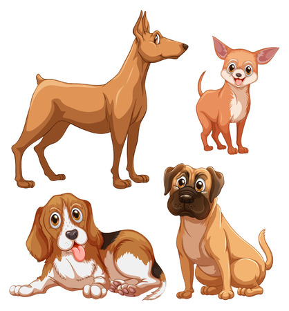 honest: Differrent breed of brown color dogs on white background