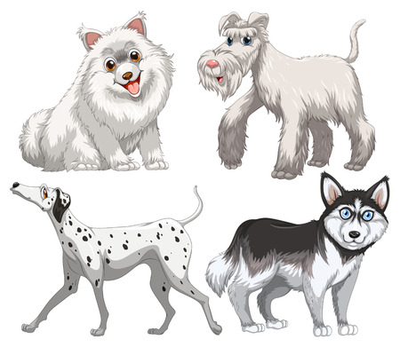 canine: Different kind of canine illustration