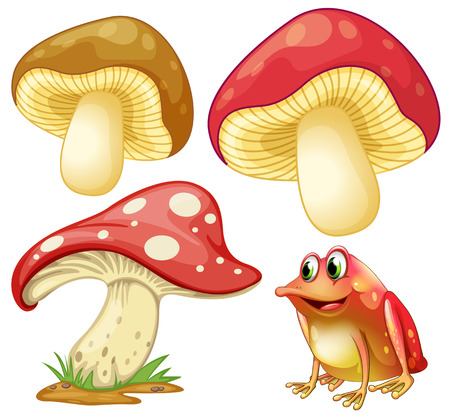 red frog: Fresh mushrooms and red frog illustration