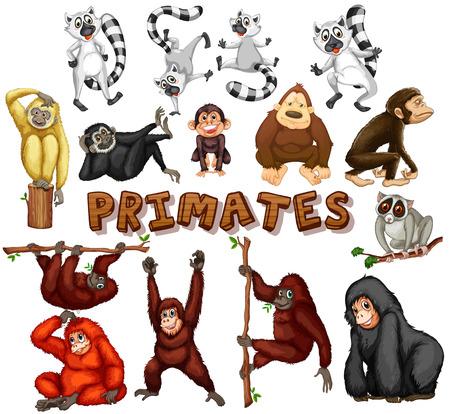 primates: Different kind of primates illustration