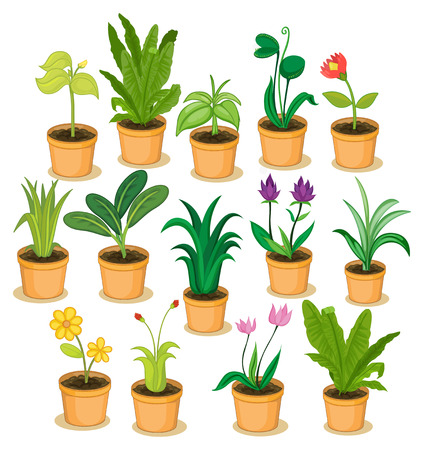 Potted plants and flowers illustration
