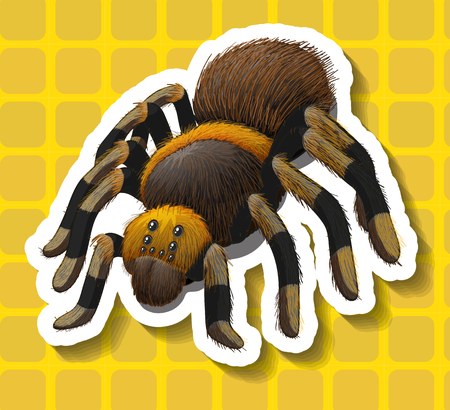 spider: Poisionous spider on yellow background illustration