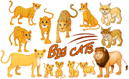 leones: Diferentes tipos de león y tigre ilustración