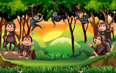 animales safari: Monos escalada árbol en la ilustración de la selva Vectores