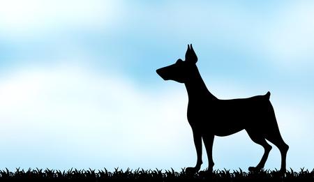 greyhound: Silhouette greyhound on the field illustration