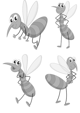 infected mosquito: Mosquito in four different poses illustration