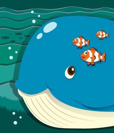 clownfish: Whale and clownfish swimming  illustration