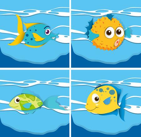 puffer fish: Different kind of fish illustration