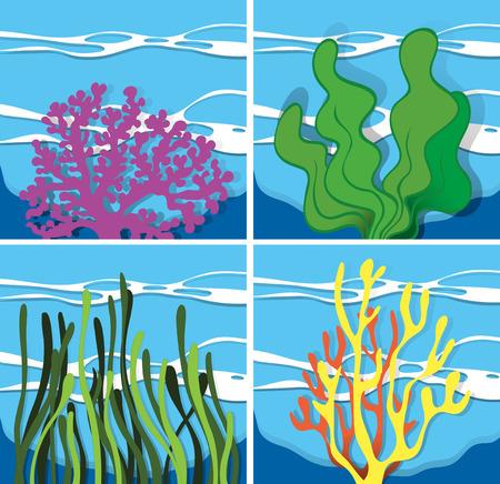 algas marinas: Los arrecifes de coral bajo el mar Ilustración