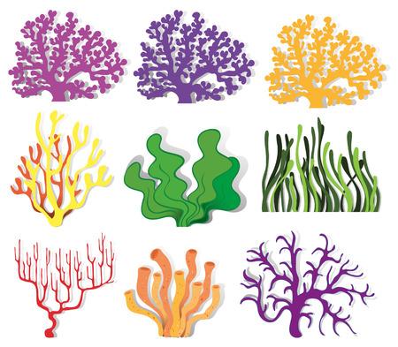 algas marinas: Varios tipo de coral ilustración arrecife Vectores