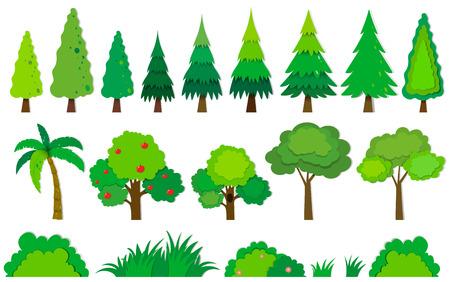 arbol de pino: Diferentes tipos de árboles ilustración Vectores