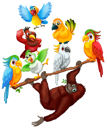 cockatoo: Chimpanzee and many birds on the branch illustration