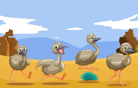 emu bird: Little ostriches running in the desert illustration