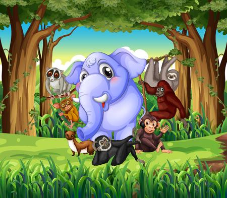 animales silvestres: Animales salvajes en la selva ilustración Vectores