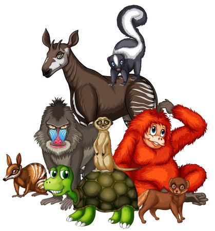 animales silvestres: Animales salvajes en la ilustración de fondo blanco Vectores