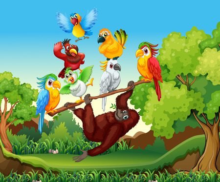 tropical tree: Wild birds and urangutan in the forest illustration Illustration
