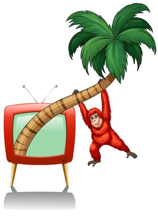 televisions: Urangutan hanging on the coconut branch illustration