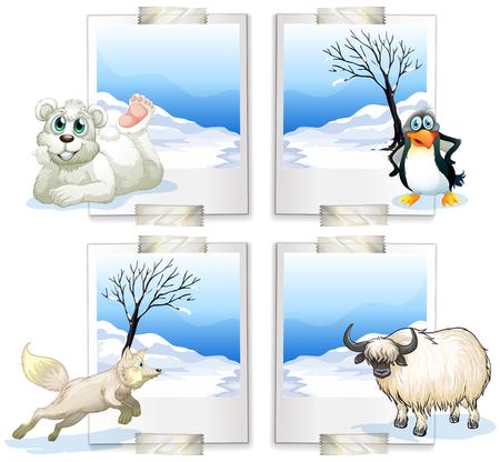 carnivorous: Four kind of arctic animals illustration