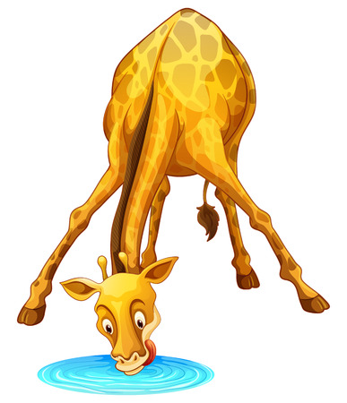 wild living: Giraffe drinking water from the puddle illustration Illustration