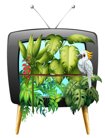 televisions: Macaw bird in the jungle illustration