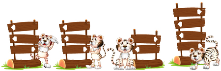 white tigers: White tigers by the wooden sign illustration
