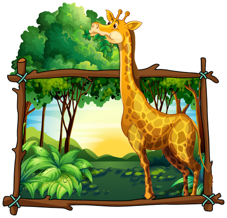 tropical tree: Giraffe eating leaves on the tree illustration Illustration